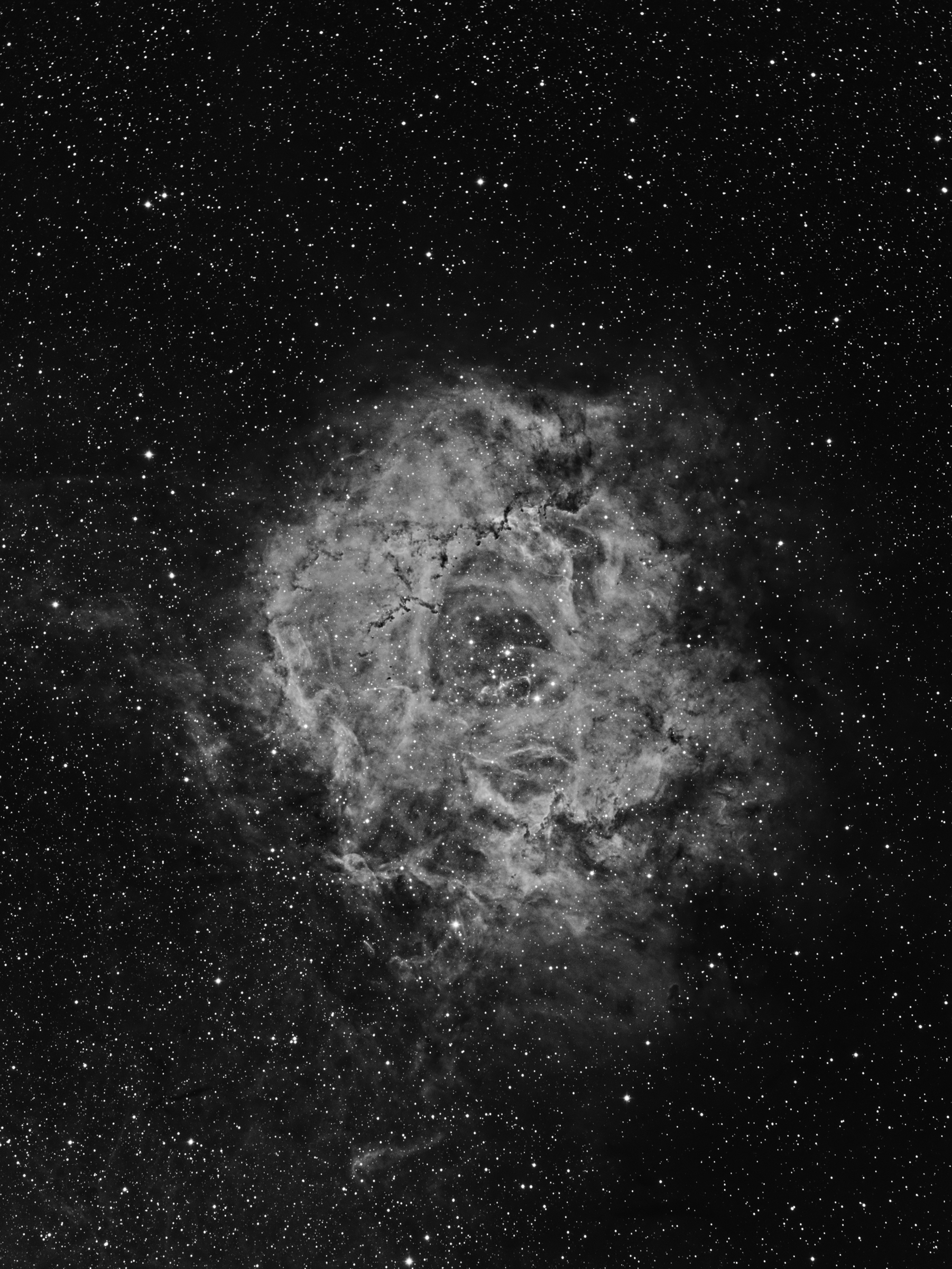 NGC 2244 (The Rosette in Ha)